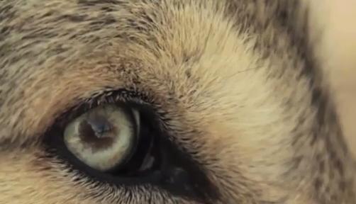 lobos-curso-rio-cascasdas-troficas