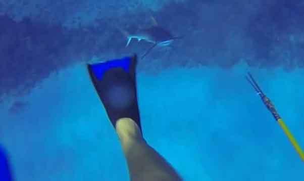 buceador-atacado-tiburon
