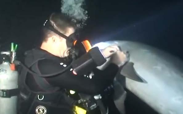 delfin-ayuda-buceadores