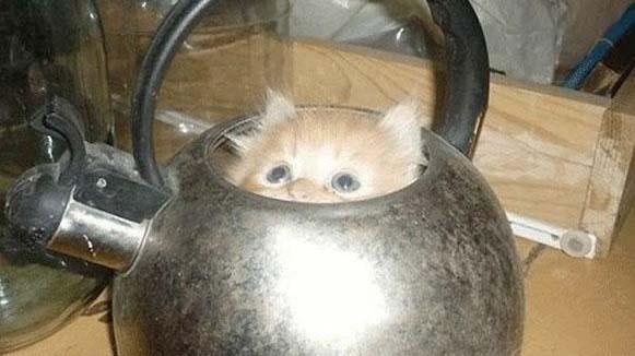 gatos-sitios-estrechos