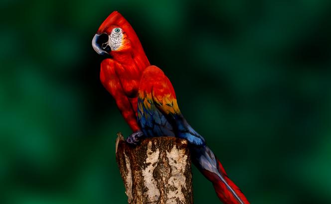 pintura-corporal-pajaro