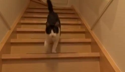 gato-recibe-amo-perro