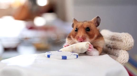 hamster-burritos
