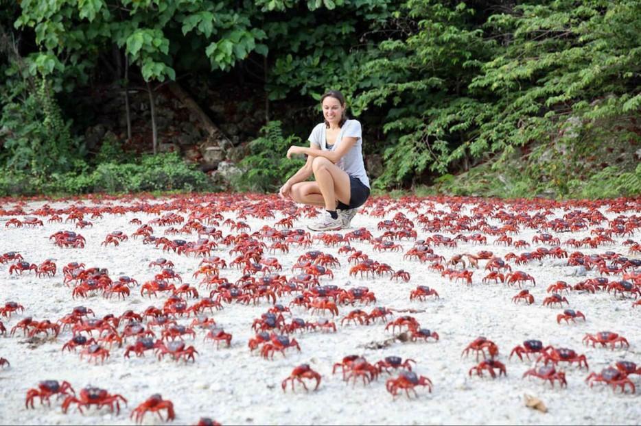 migracion-masiva-de-cangrejos-1