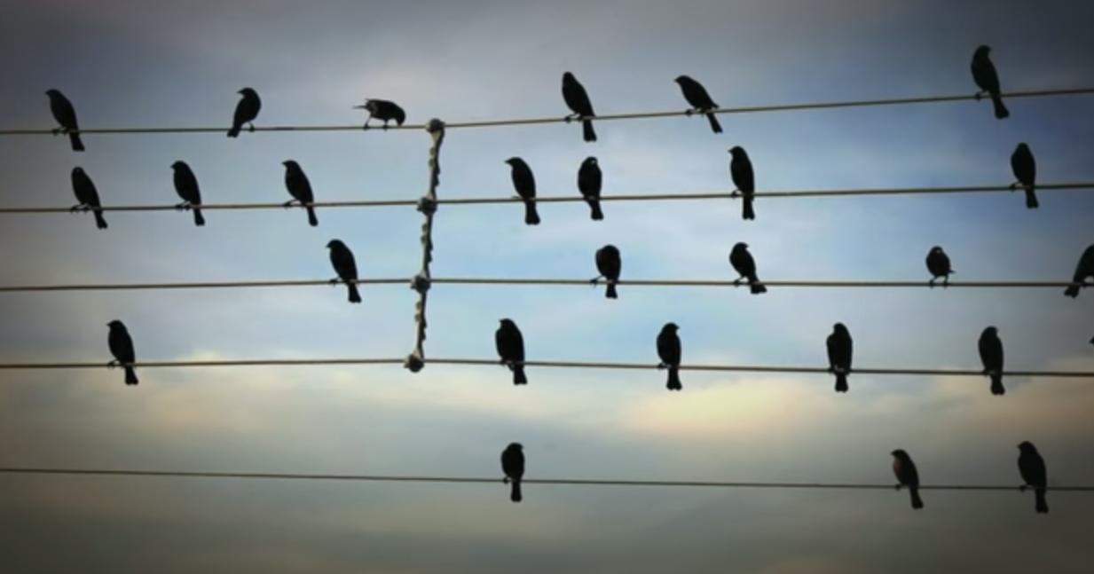 pájaros-partitura