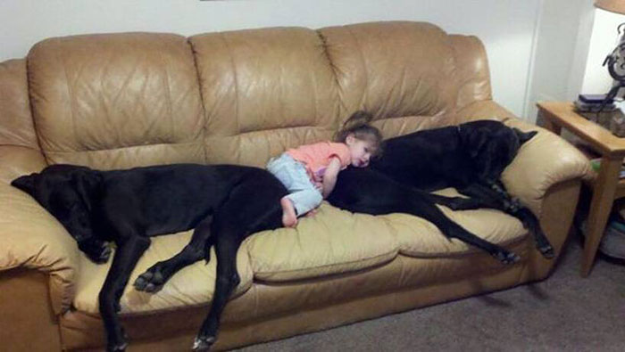 cute-big-dogs-and-babies-11
