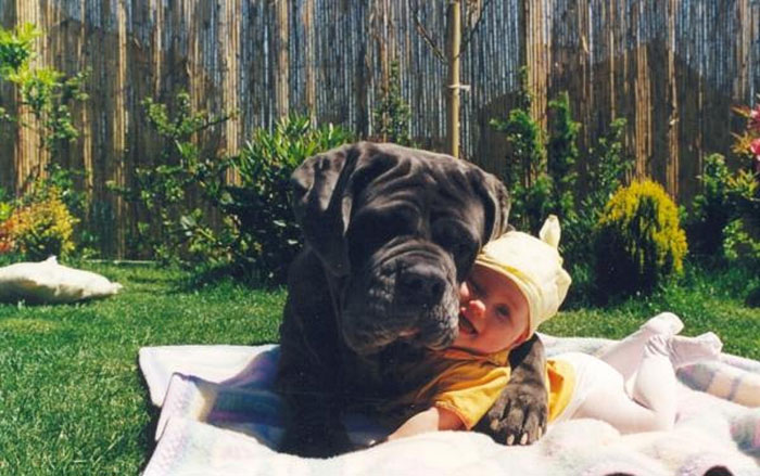 cute-big-dogs-and-babies-3