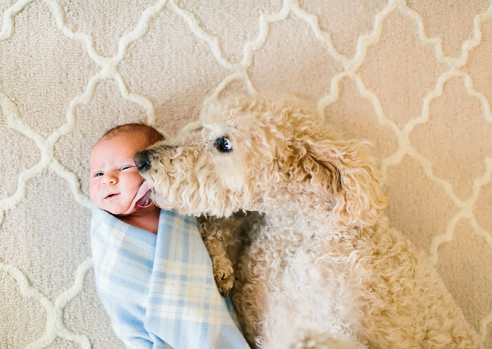 cute-big-dogs-and-babies-8
