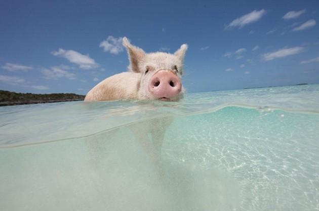 isla-de-los-cerdos-4