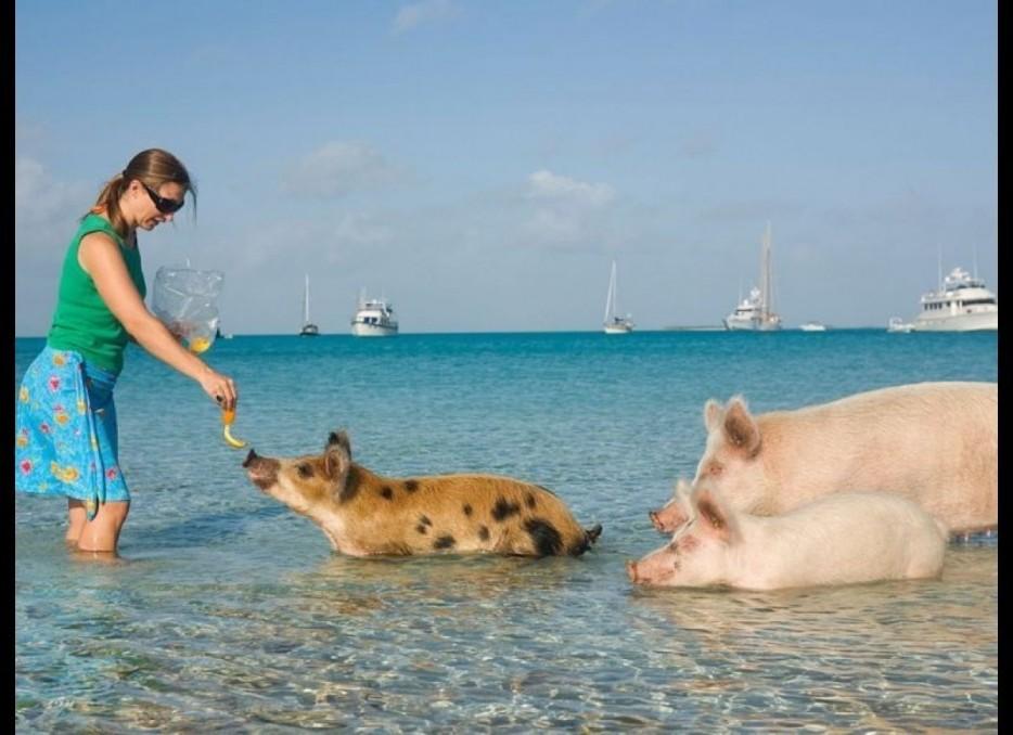 isla-de-los-cerdos-6