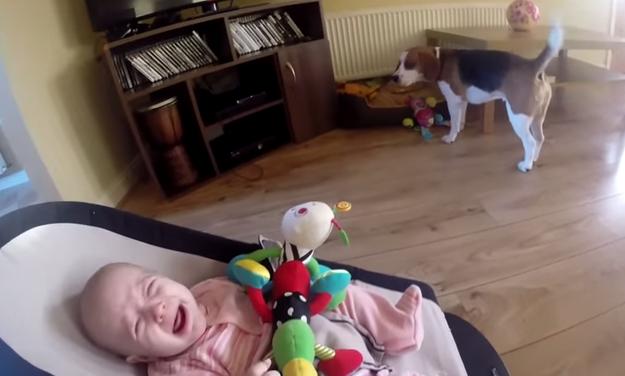 perro-roba-juguete-1