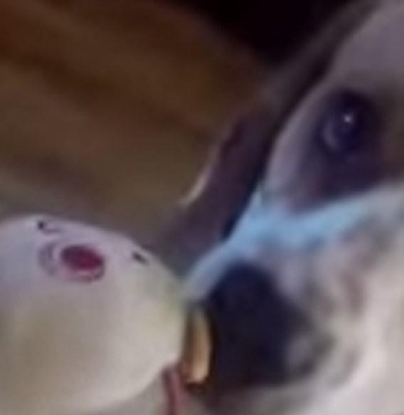 perro-roba-juguete-3