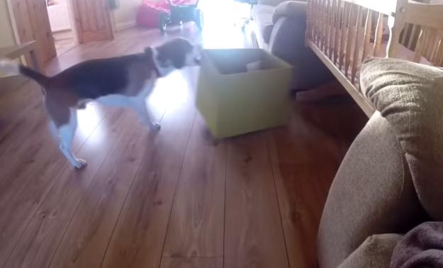 perro-roba-juguete-5