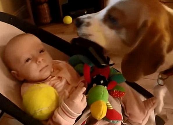 perro-roba-juguete-6
