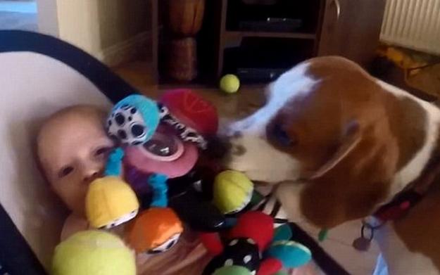 perro-roba-juguete-7