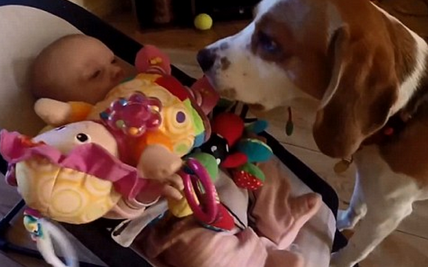perro-roba-juguete-8