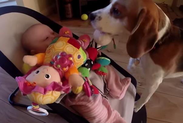 perro-roba-juguete-9