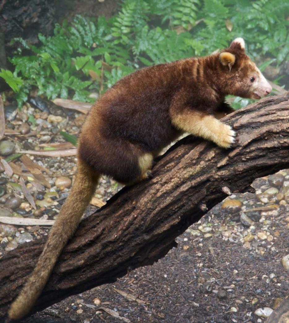 Animales en extincion 1
