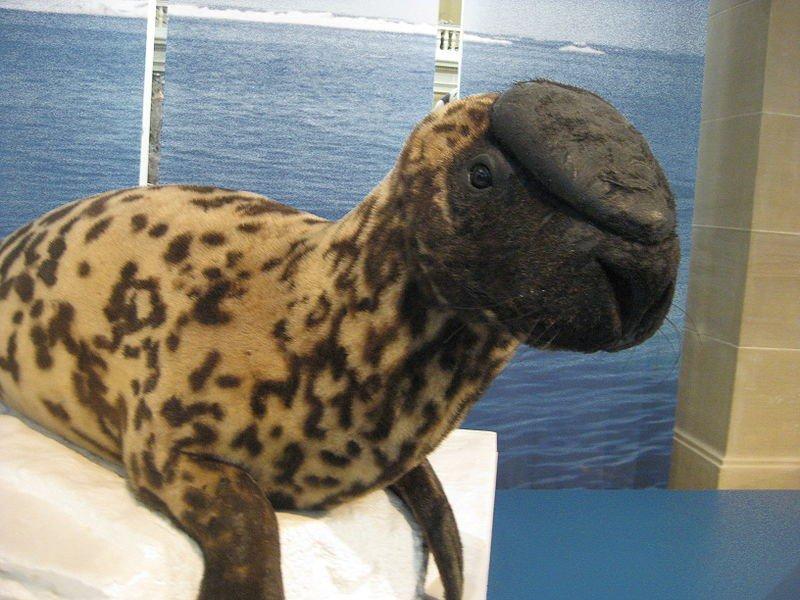 Animales en extincion 11