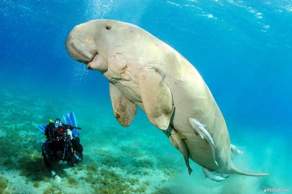 Animales en extincion 14