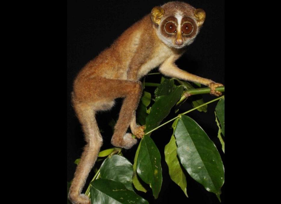Animales en extincion 15