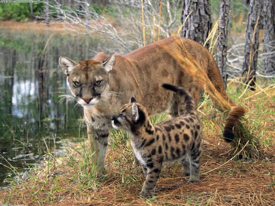 Animales en extincion 21