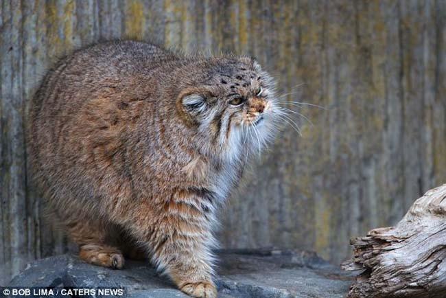 Animales en extincion 22
