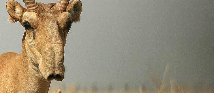 Animales en extincion 5