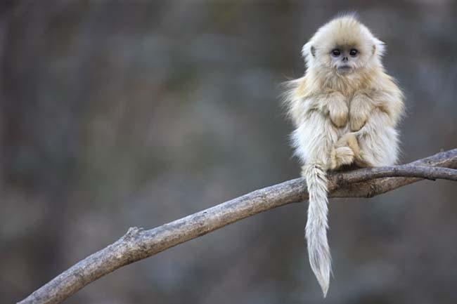 Animales en extincion 7