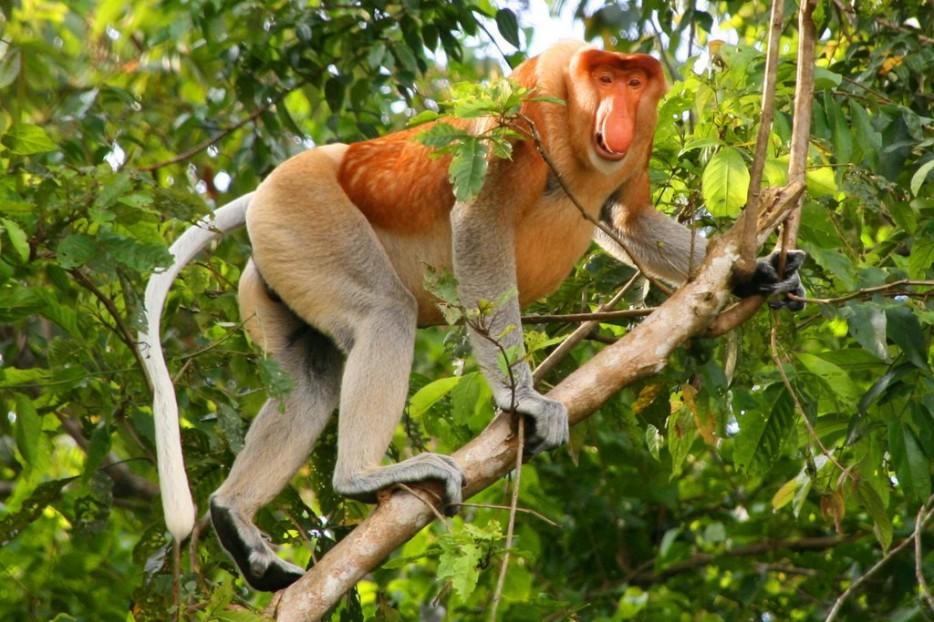 Animales en extincion 9