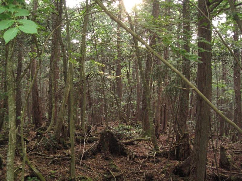«Aokigahara forest 04» por mtzn - 青木ヶ原樹海. Disponible bajo la licencia CC BY-SA 2.0 vía Wikimedia Commons.