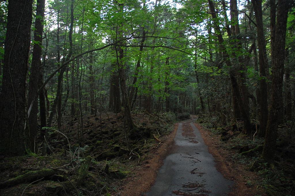 «Aokigahara 05» por Simon from Quebec, Canada - DSC_4502
