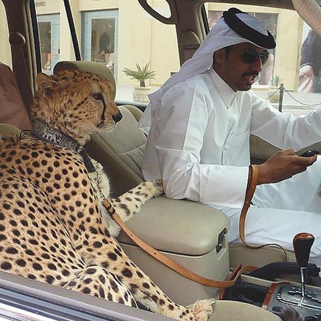 Dubai 37