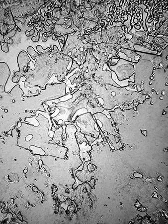 Lagrimas al microscopio 1