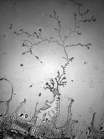 Lagrimas al microscopio 11