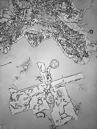 Lagrimas al microscopio 9