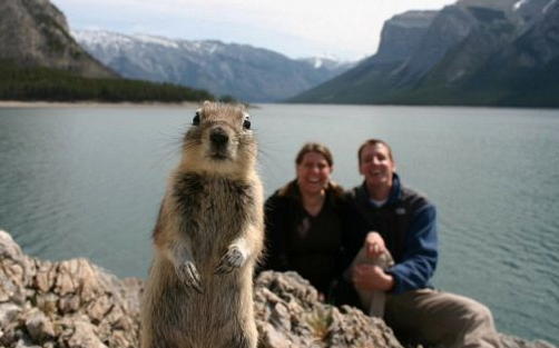 animales-photobomb