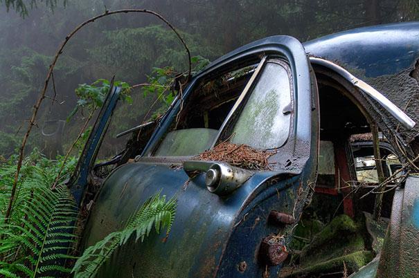 cementerio coches 11