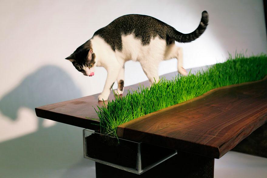 muebles gatos 15,1