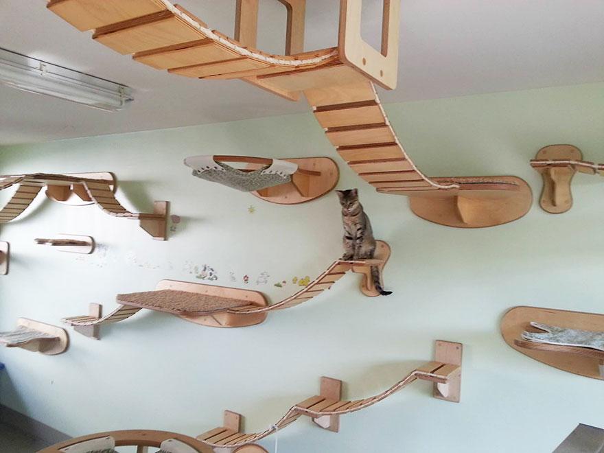 muebles gatos 22,1