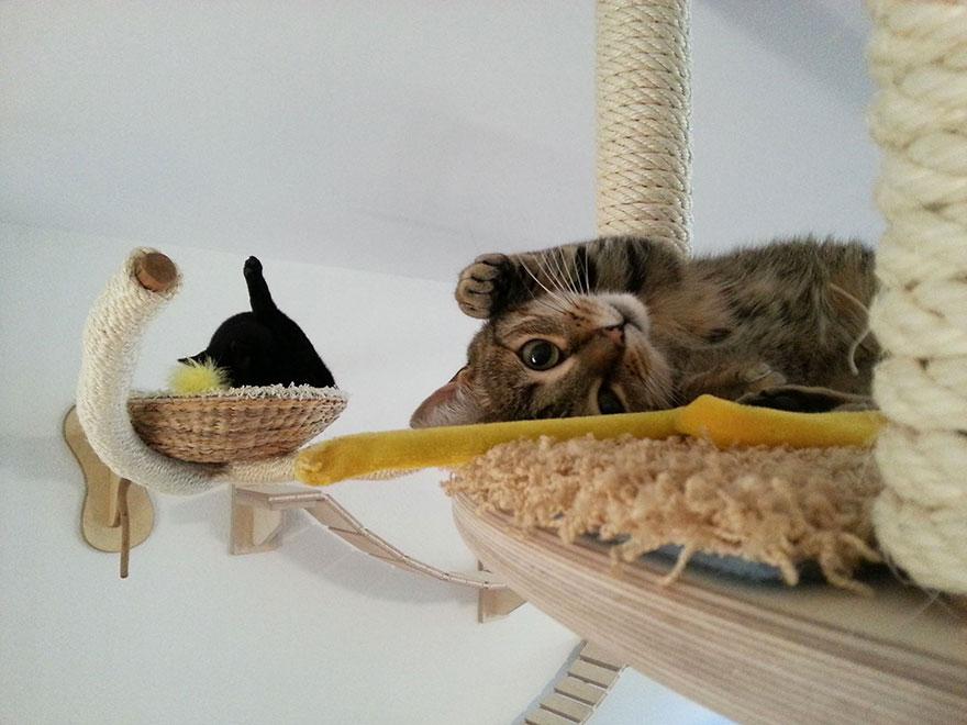 muebles gatos 22,2