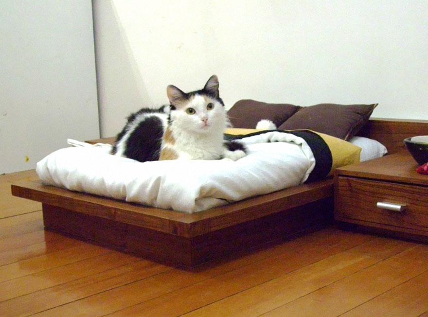 muebles gatos 3.1
