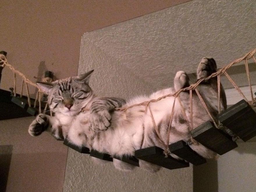 muebles gatos 4.1