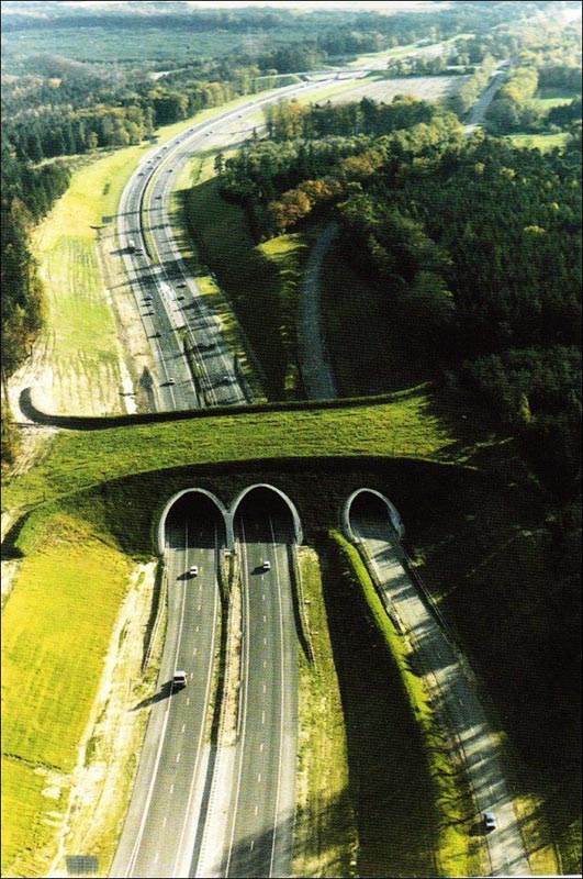 puenteanimales2