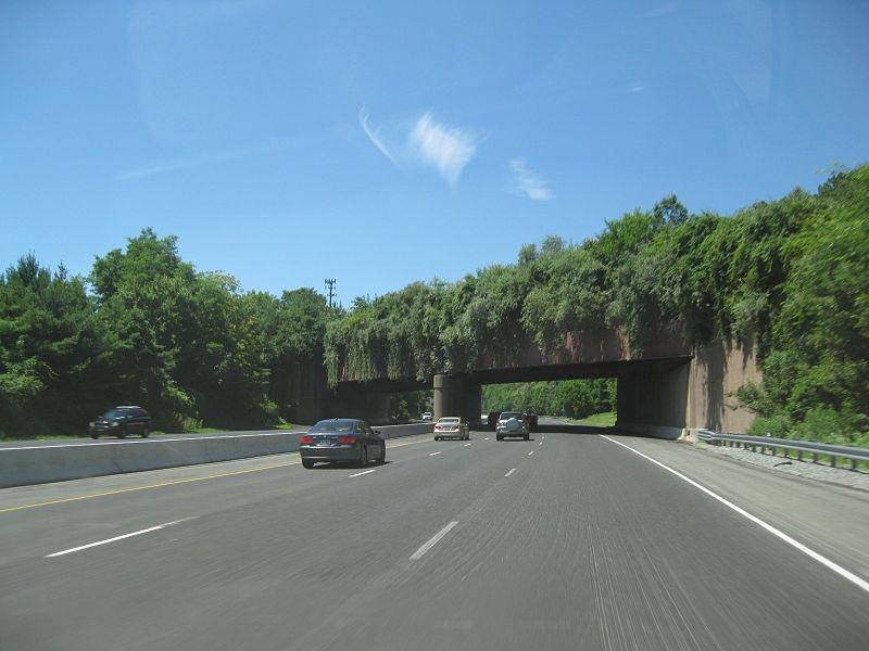 puenteanimales9