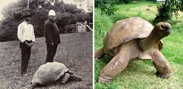 tortuga gigante 1