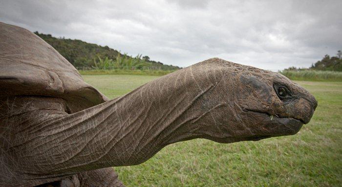 la tortuga más vieja del mundo