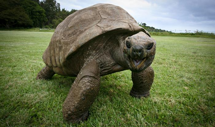 tortuga gigante 6