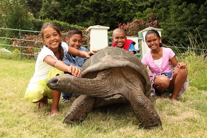 tortuga gigante 8
