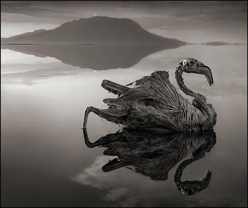 Lago alcalino 5
